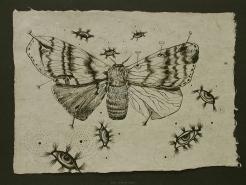 d011-gypsy-moth.JPG